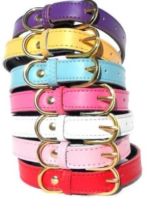Chelsea Custom Dog Collars By PET TAGS DIRECT Dublin Ireland in Various Colors