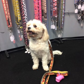 PET TAGS DIRECT Lola in her Wonder Woman