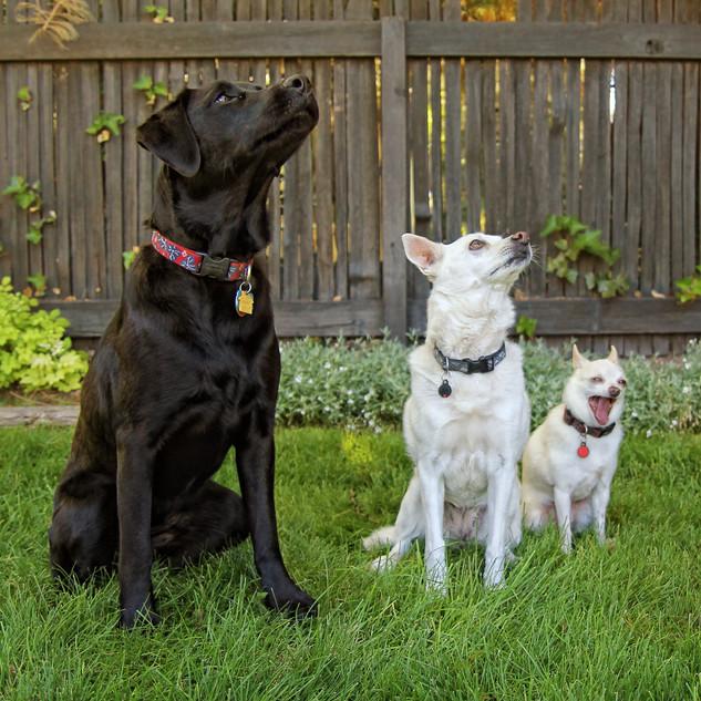 Family Photo All Three Sporting A PET TA