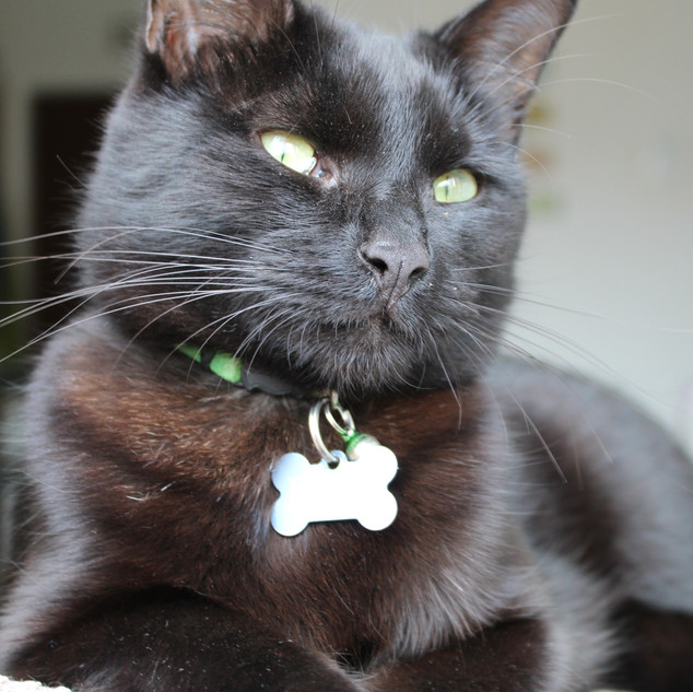 PET TAGS DIRECT BLACK CAT CHILLING OUT W