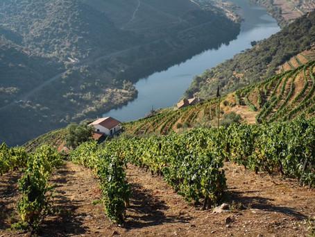 Douro Valley Weddings: A breathtaking scenario