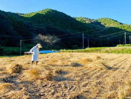 川棚町こうばるのお米は、最高