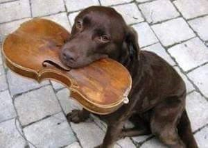 dog with violin image.png