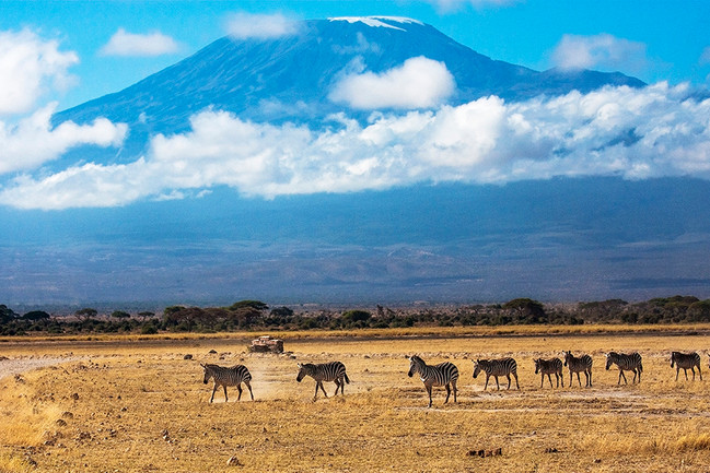 The Zebra Crossing - by Mt Kilimanjaro
