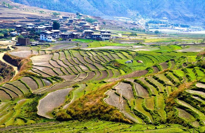 Bhutan Greens