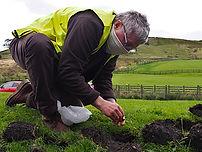 Image of Crocus Planting