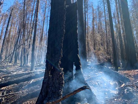 Fox Creek Holdover Fire