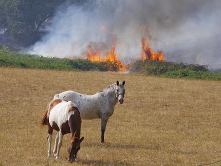 Mystic Mountain Fire