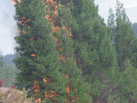 Louis Creek Fire