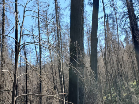 Hill Creek Fire