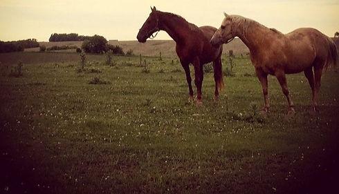 horses-picture-2_edited_edited.jpg