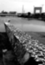 holanda, arte de rua, sticker graff, graffiti, spray, ams,henrique montanari, ndsm, amsterdam, edmx, invasora, sticker, artistic intervention, stencil, spray street art, netherlands, ho