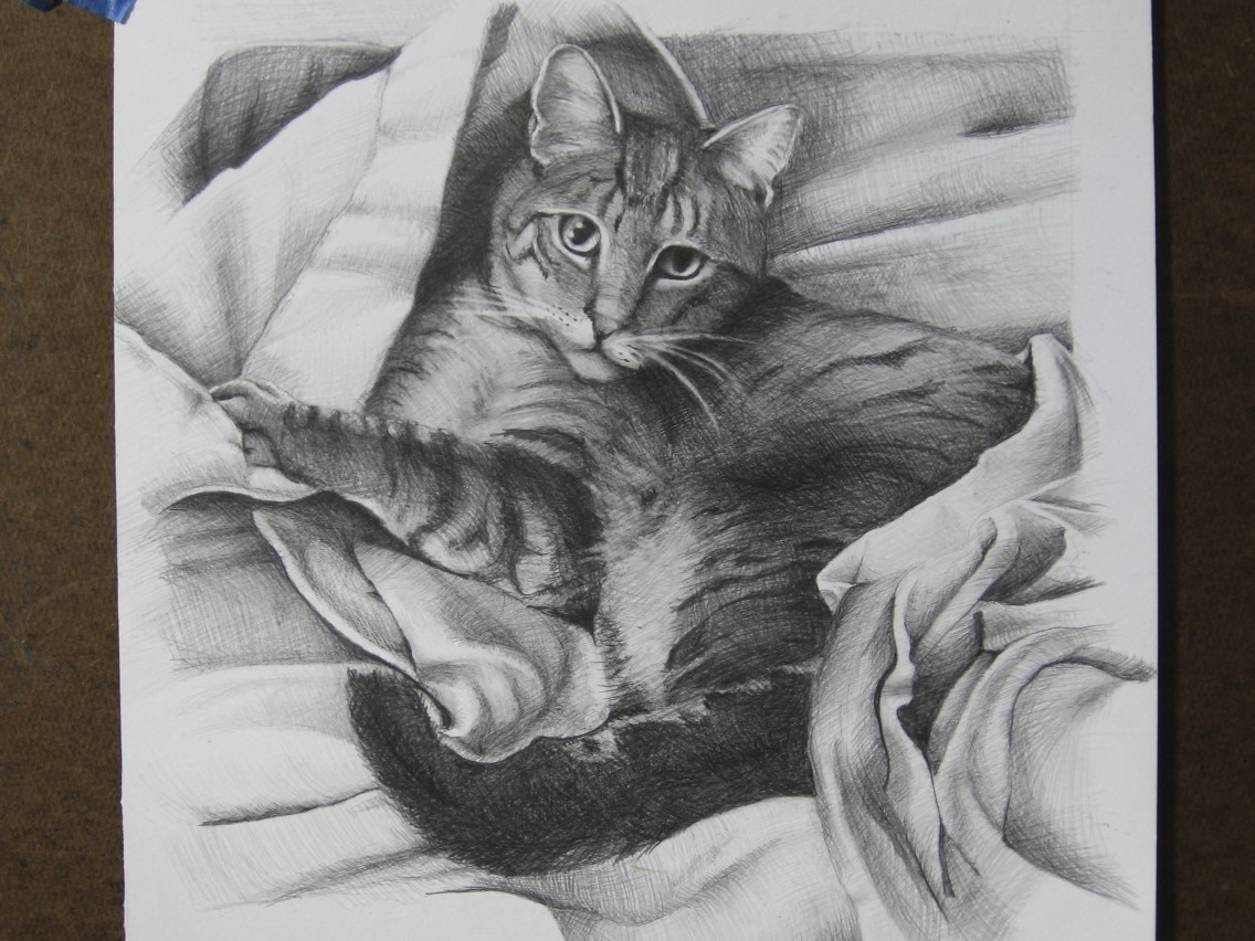 Zeke: pencil on Paper portrait of a cat