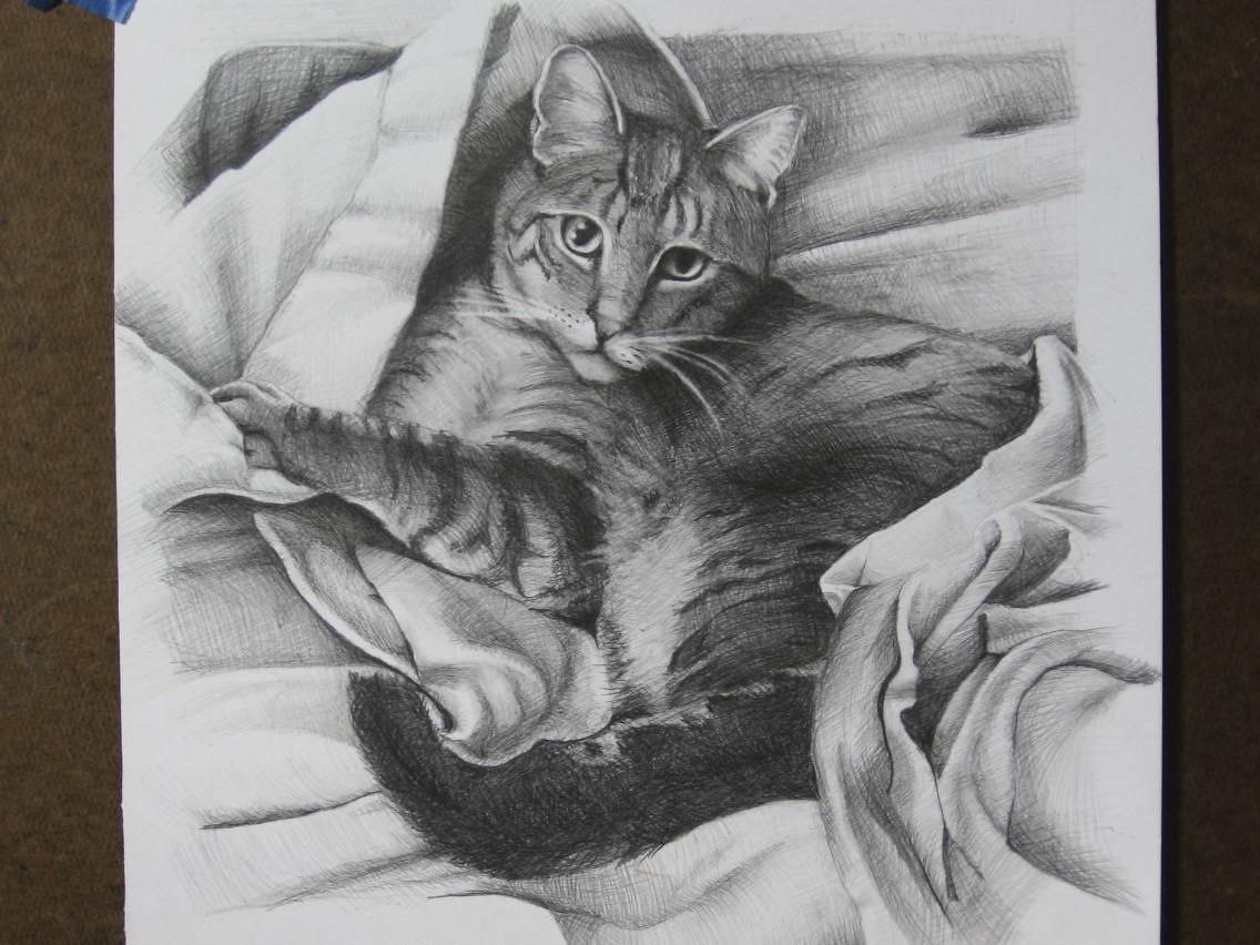 Zeke: pencil on Paper portrait of a cat