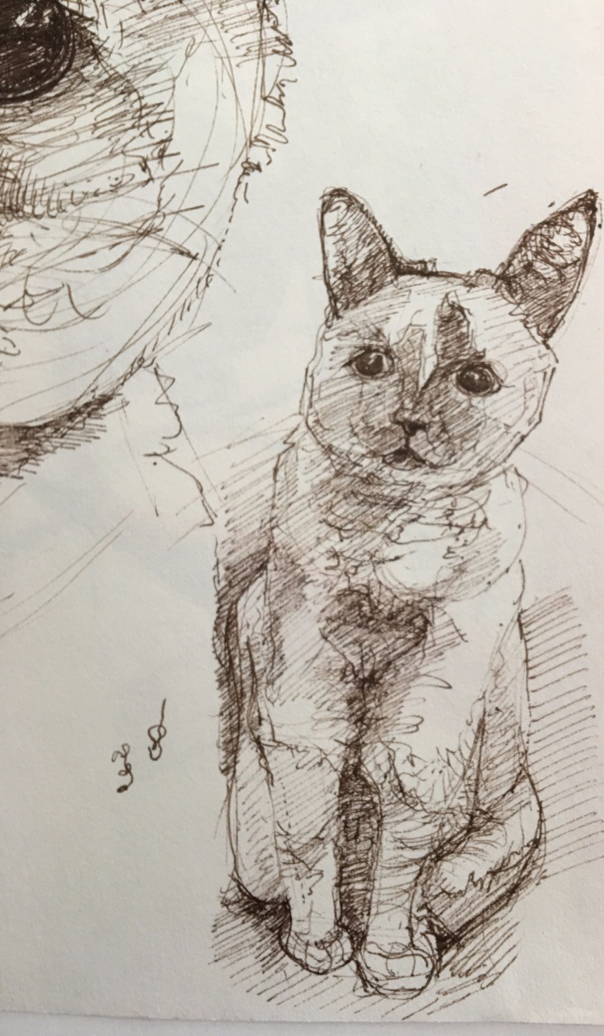 pen sketch of a cat sitting looking at the viewer