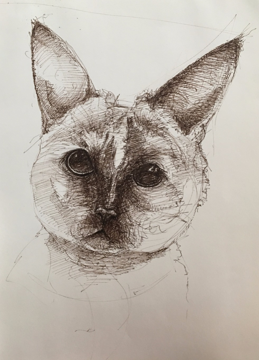 pen drawing of cat head looking at the viewer.
