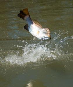 Barra Wyndham Fishing