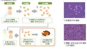 長崎大學免疫療法臨床實驗資訊