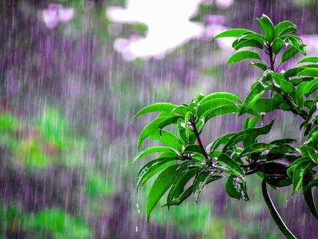 संस्मरण - बारिश का एक दिन