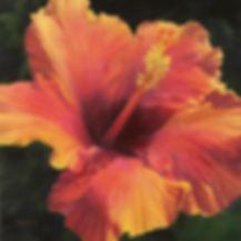 Balmert- Hawaiian Hibiscus 24x24s .jpg O