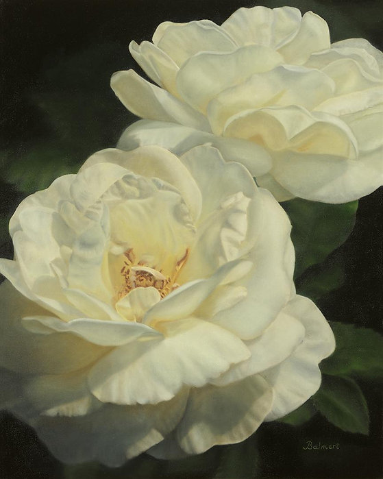 Lily Pons Roses