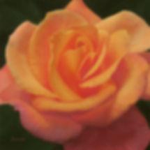 Balmert- Mamma Mia Rose 24x24s jpg.jpg