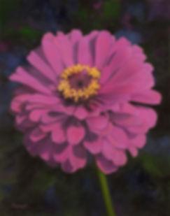 Balmert- Luminosa Pink Zinia 28_ x 22_ O