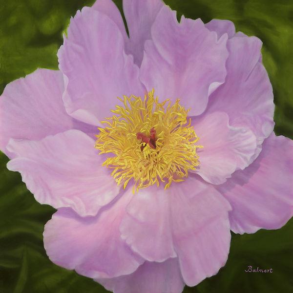 Balm- Lady Penzance Rose 24x24s.jpg