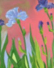 Iridescent Iris.jpg