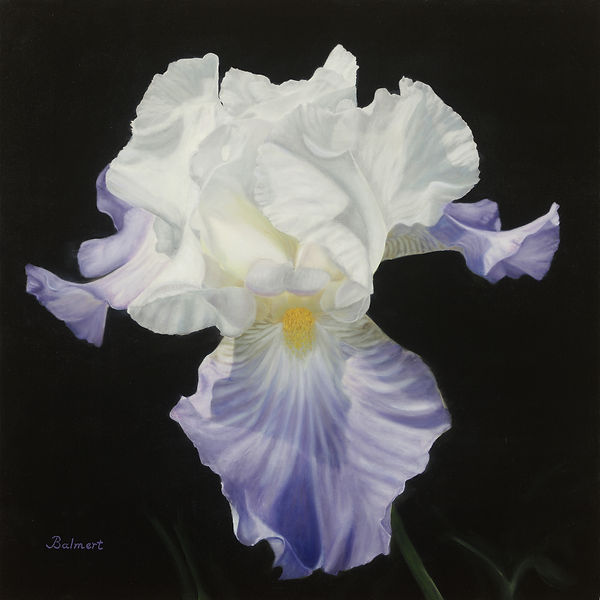 Balm- Monet's Iris 24x24s.jpg
