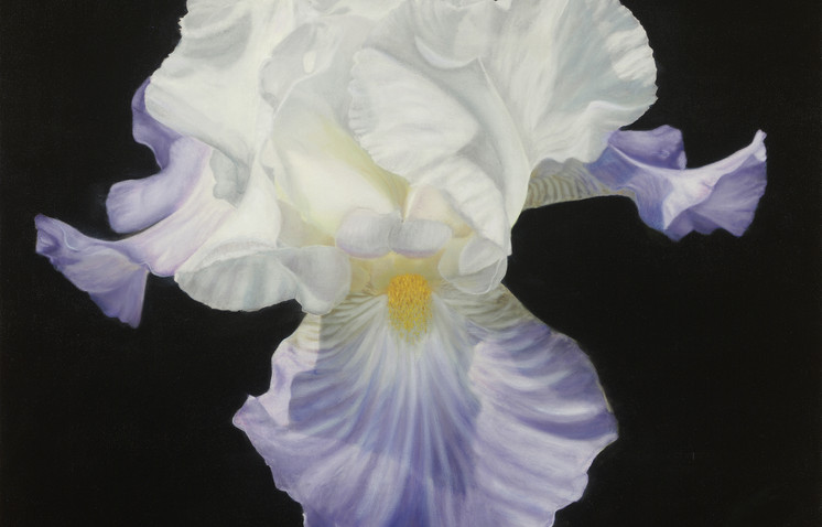 """Monet's Iris"" by: Nancy Balmert Oil on Canvas 24"" x 24"""
