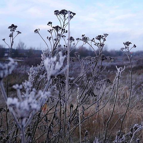 An Estonian Winter.jpg