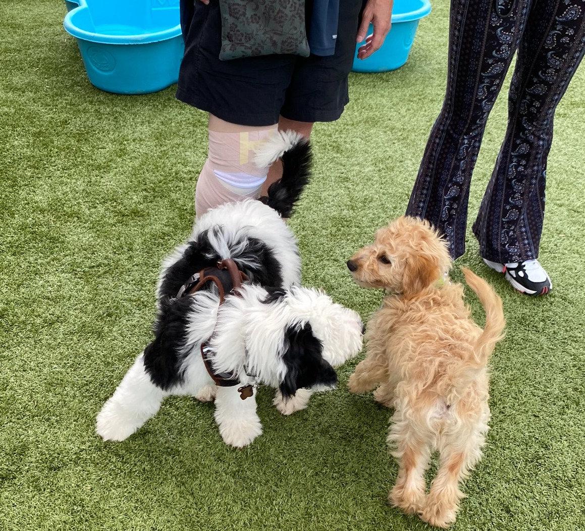 Puppy Socialization- Start Right Away