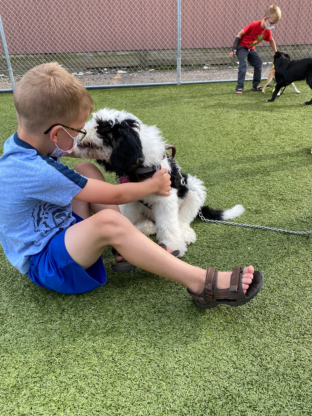 A child in a blue shirt pets a shepadoodle pup. Another child plays with dogs in the background