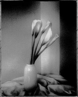 034 - Flowers, Prague 2005