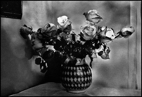 Květy, Tunis, 1973
