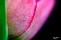Summer Colours 3 - Elizabeth James