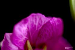 Gloriously Pink 4 - Elizabeth James