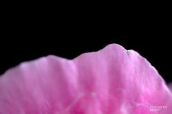 Pink Princess 1- Elizabeth James