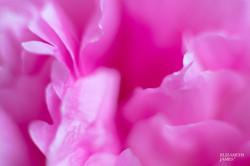 Pink Princess 6 - Elizabeth James
