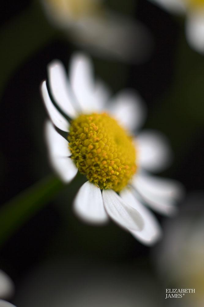 Sunny Side Up 1- Elizabeth James
