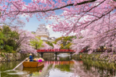 hanami-castillo-himeji.jpg