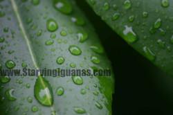"""[45]   """"Dew Droplets"""""""