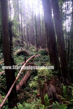 "[141]   ""Bear Walking on a Log"""