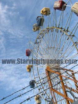 "[117]   ""Crippled Ferris Wheel"""