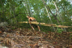 D. Hauling Bamboo UP