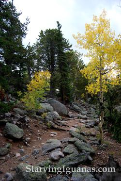 """[361]   """"Rocky Trail"""""""