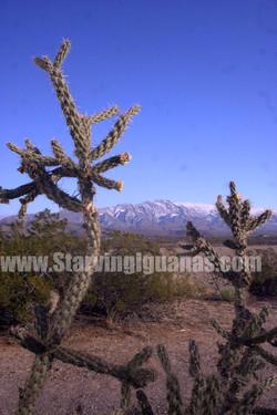 """[156]   """"Reaching Cactus"""""""