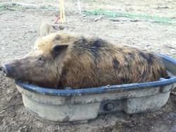 RZA (Rusty) takin a whey bath