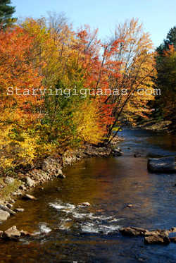 "[302]    ""New Hampshire Brook"""